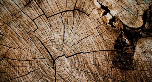 drewno-energetyczne_1